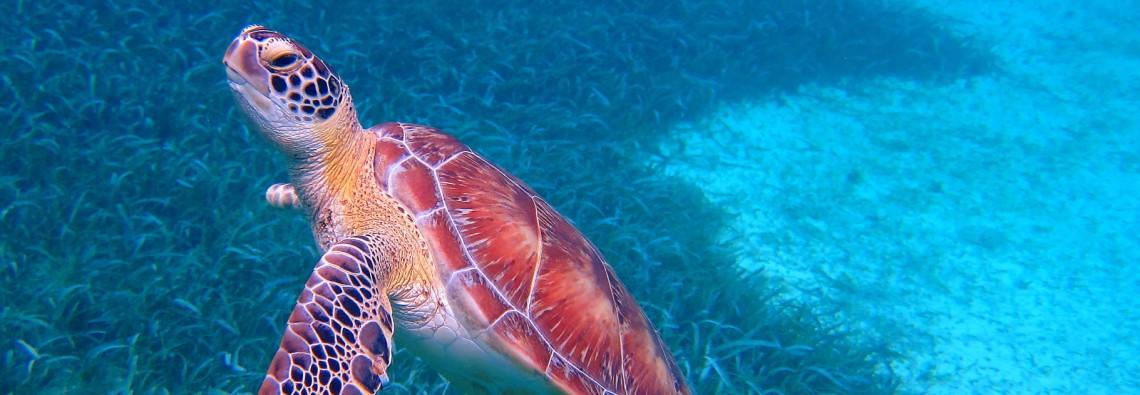 Alex_Mondanel_tortue_Belize