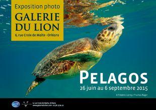Pelagos_galerie_du_Lion_Orléans
